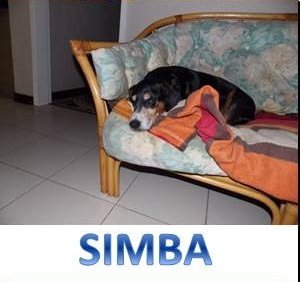 SimbaRusty