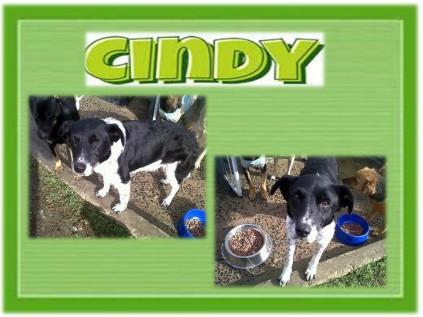 CindyBC