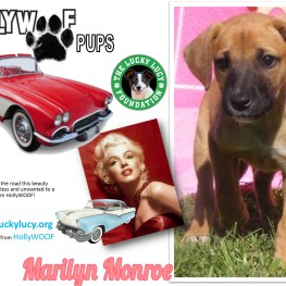 Adopt hollywoof marilyn