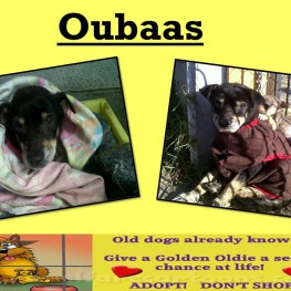 OUBAAS POSTER
