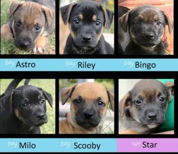 6 pups