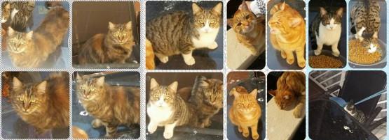 4cats