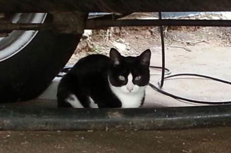Found Cat - Tuxedo - Kenridge