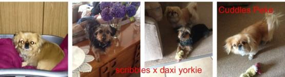 ScribblesCuddles