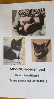 lost-kitten-oreo-tuxedo-goedemoed