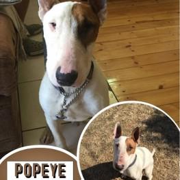 Popeye (Johannesburg)