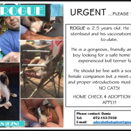 Rogue (Durban)