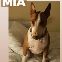 Mia (Randfontein)