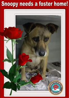 Snoopy foster home needed.