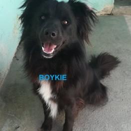 Boykie