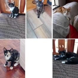 CPT Kittens