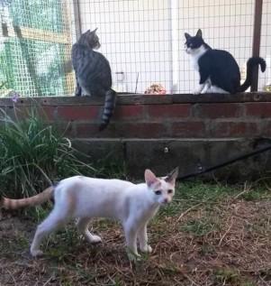 Camelotcats
