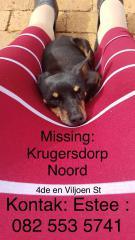 Krugersdorp Missing