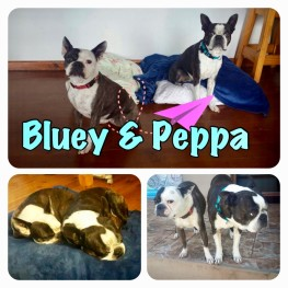 BlueyPeppa