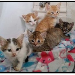 Purfect Kittens