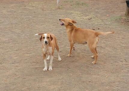 2. Rex & Roxy