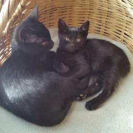 17. Max & Dexter