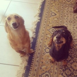 Lulu & Bessie1