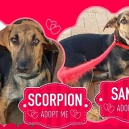 SammyScorpion