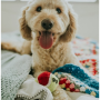 Insta-Fame Your Pooch