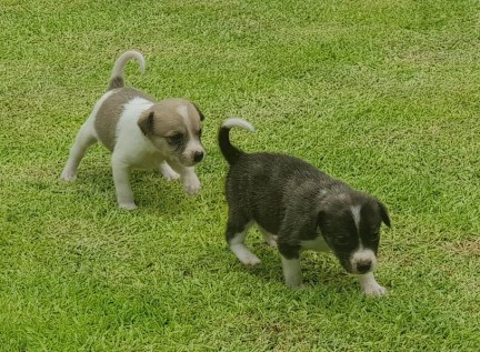 5. Luna & Lily