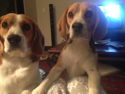 Basil & Elvis
