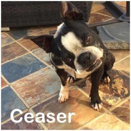 Ceaser