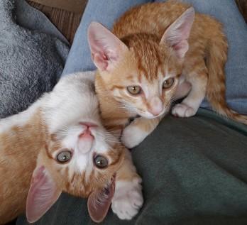 Bennie & Freddie_2