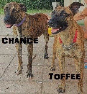 CHANCE & TOFFEE