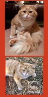 KittyMissing