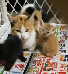 8. Ginger Kitty