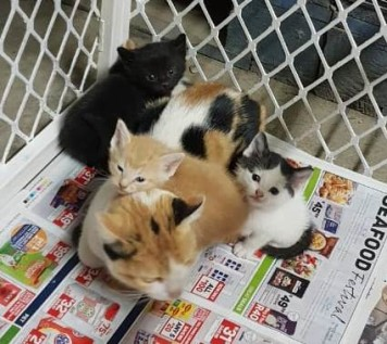 9. Kittens needing homes