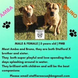 Amba and Bruno