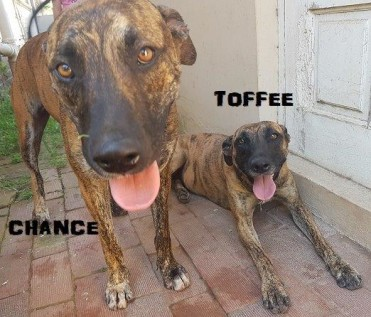 TOFFEE & CHANCE1