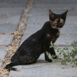 2. Striking a pose Rosie