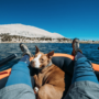 Cruising The Waves With Your Dog