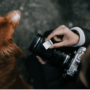 Capture That Happiness: How To Get Better Photos Of Your Dog